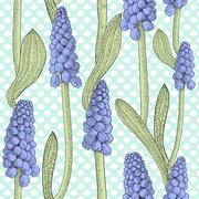 Seamless pattern with grape hyacinth, or muskari, on dotted background Stock Illustration