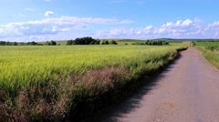 Country road near unripe grain, South Moravia, Czech republic Stock Footage