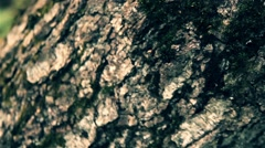 Green Moss On A Tree Stock Footage