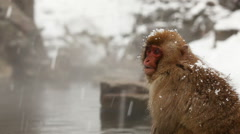 Snow Monkey (Japanese Macaque) in Hot Spring Stock Footage