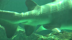 Shark Tail And Fins Underwater Stock Footage