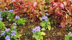 Pink And Blue Flowers Stock Footage