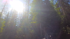 Gliding past blowing aspen and pine with sun flare in lens Stock Footage