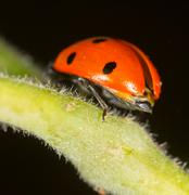 Ladybug on a plant in the nature Stock Photos