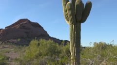 Cactus pan up to reveal moutain Stock Footage