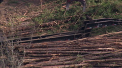 Forestry In Borden Stock Footage