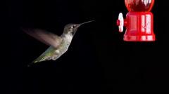 Hummingbird Feeding Slow Motion. Stock Footage