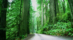 Redwood National Park Stock Footage