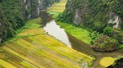 Rice Paddies In Vietnam Stock Footage