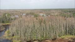 Okefenokee Swamp Stock Footage
