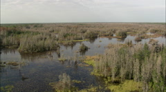 Colours In The Okefenokee Swamp Stock Footage