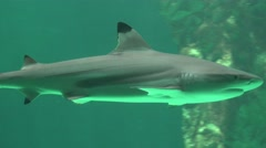 Shark Marine Life And Predatory Animals Stock Footage