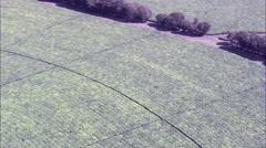 Magwa Tea Plantation Stock Footage