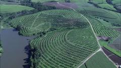 Sugar Cane And Macadamia Fields Stock Footage