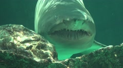 Predatory Fish And Sea Creatures Stock Footage