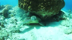 Turtle polishing shell Stock Footage