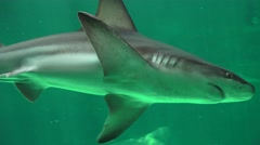 Shark Swimming Among Fish Stock Footage