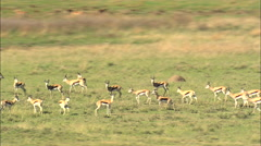 Springbok, Impala, Wildebeest And Blesbok Stock Footage
