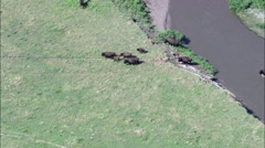 Buffalo Grazing By Small River Stock Footage