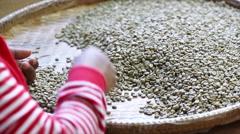 Worker select coffee berries seed broken by hand Stock Footage