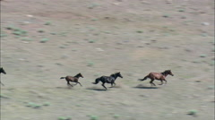Mustangs And Foals Galloping Stock Footage