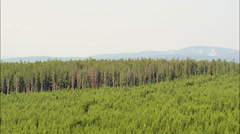 New And Old Trees In Beaverhead Deerlodge National Forest Stock Footage