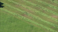 Cutting Grass For Hay Stock Footage