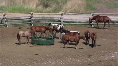 Rock Creek 'Dude' Ranch Stock Footage