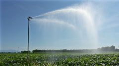 irrigation of a corn field in summer - stock footage