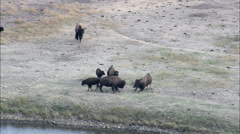 Buffalo In Bear State Park Stock Footage