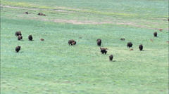 Buffalo At Fort Robinson Stock Footage
