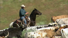 Cattle Driving At Fort Robinson Stock Footage