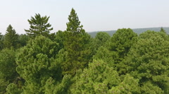 Vertical panorama along the large cedars. Stock Footage