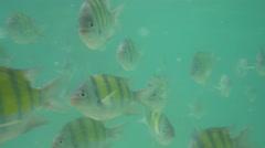 Underwater fish shoal Stock Footage