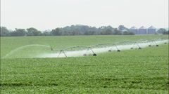 Watering Maize Crops Stock Footage