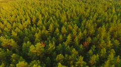 Aerial View. Flying over the forest trees. Aerial drone shot. Arkistovideo
