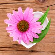 Homeopathy and cooking with echinacea Stock Photos