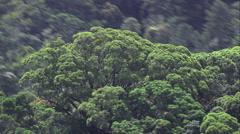 Itatiaia National Park Stock Footage