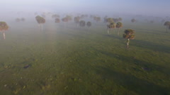 Early morning aerial over mist covered field Stock Footage