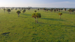 Low aerial view of Florida pasture land in early morning light Stock Footage