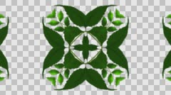Green leaves Kaleidoscope - With Alpha Stock Footage