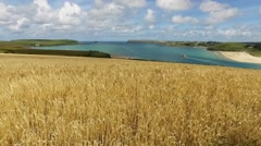 View up and over a golden wheat field to a turquoise river estuary. Stock Footage