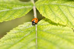 ladybug on a plant in the nature. macro - stock photo