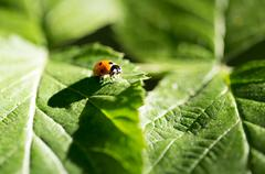 Ladybug on a plant in the nature. macro Stock Photos