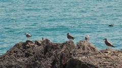 Bird Seagull on Rock Stock Footage