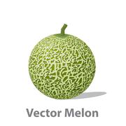 Realistic melon ball isolated on white Stock Illustration