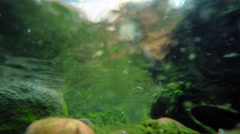 Underwater stream flow with seaweed on rocks Stock Footage
