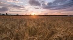 Field of wheat at Sunset Timelapse Stock Footage