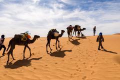 Camel caravan going through the Sahara desert Stock Photos