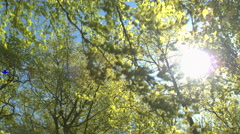 Sunlight penetrating through green tree canopies and branches in sunny spring Stock Footage